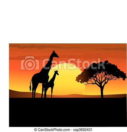 áfrica, pôr do sol, safari - csp3692431