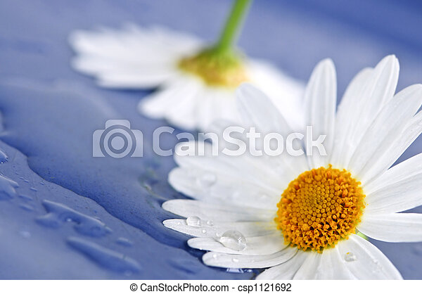 água, flores, gotas, margarida - csp1121692