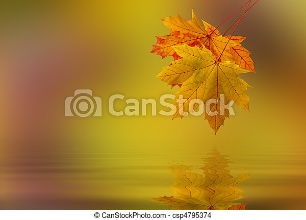 água, folha, caído - csp4795374