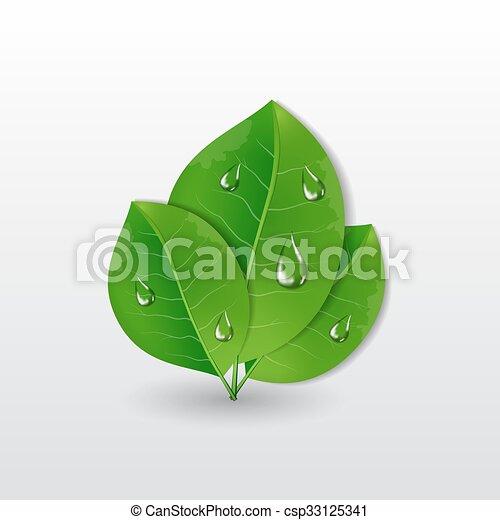 água, folhas, gotas, verde - csp33125341