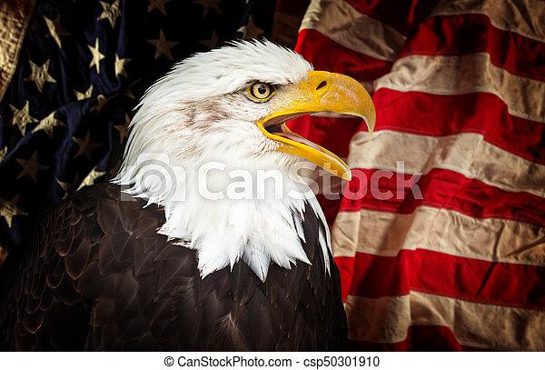 águia, americano, calvo, flag. - csp50301910