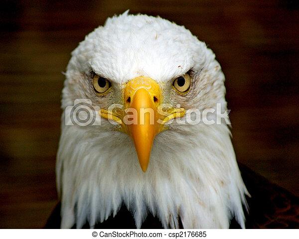 águia, arrojado - csp2176685