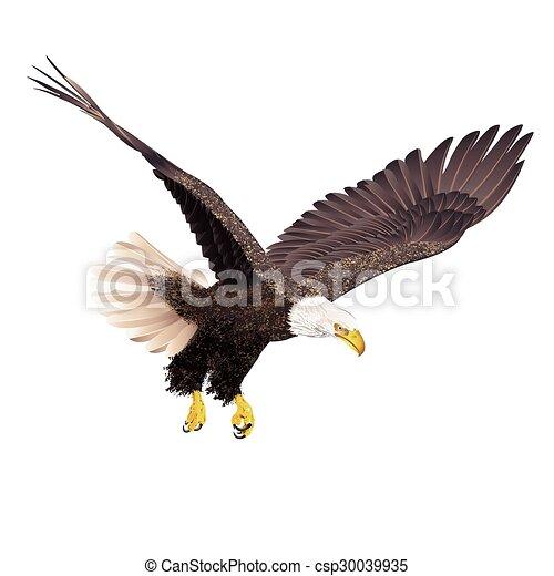 Águila Calva aislada en fondo blanco. - csp30039935