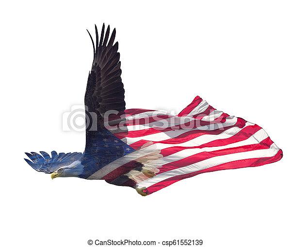 Doble exposición de águila calva en bandera americana. - csp61552139