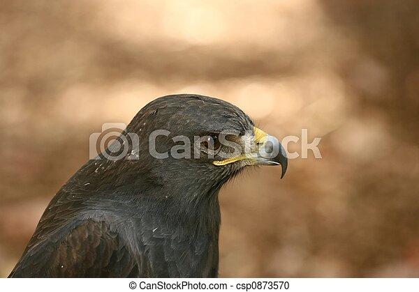 Aguila intensa - csp0873570