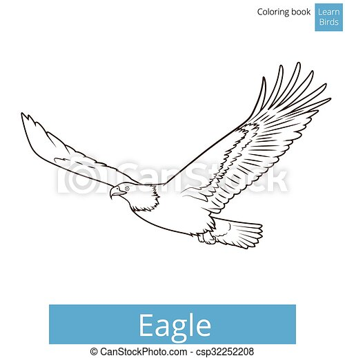 Águila, libro colorear, vector, aprender, aves. Águila, educativo ...