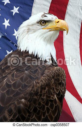águila americana - csp0358507