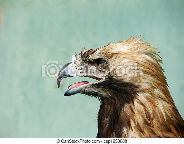 Eagle - csp1253668