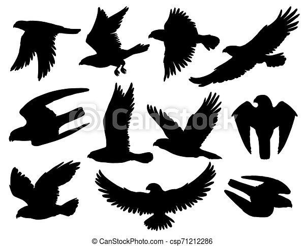 Siluetas negras de águila de halcón y halcón - csp71212286