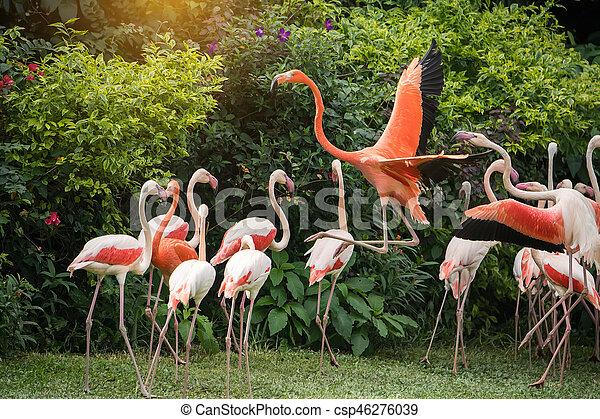 álló, flamingó, madarak - csp46276039