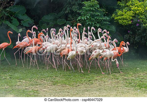 álló, flamingó, madarak - csp46447029