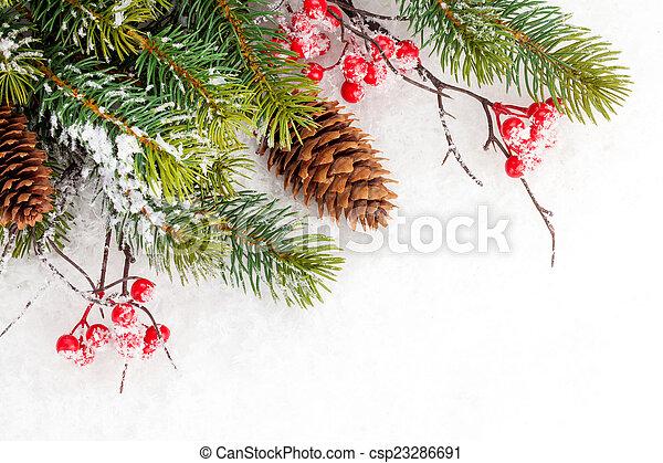 Rama de abeto navideño con bayas de acebo - csp23286691