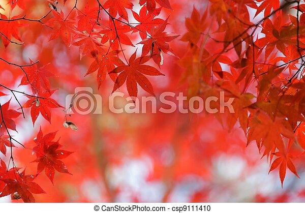 Cubierta de arce rojo - csp9111410