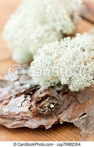 Cerca de liquen moss en corteza de pino - csp70982354