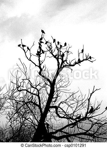 Pájaros en el árbol - csp0101291