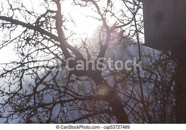 Pajarito en un árbol al aire libre - csp53727469