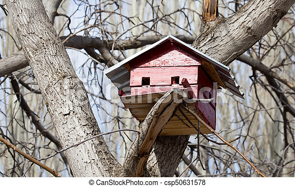 Pajarito en un árbol al aire libre - csp50631578