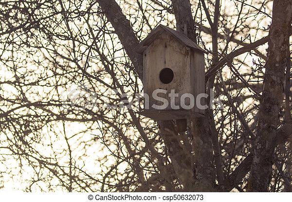 Pajarito en un árbol al aire libre - csp50632073