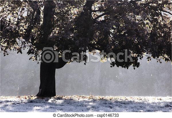 árbol, helado - csp0146733