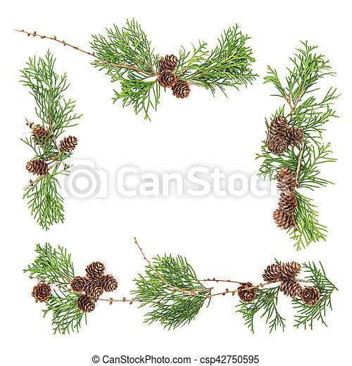 Fotograf as de archivo de rbol hoja perenne plano ramas for Ver fotos de arboles de hoja perenne