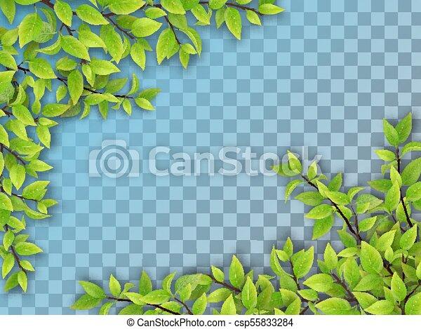 Un conjunto de ramas de árbol con hojas verdes - csp55833284