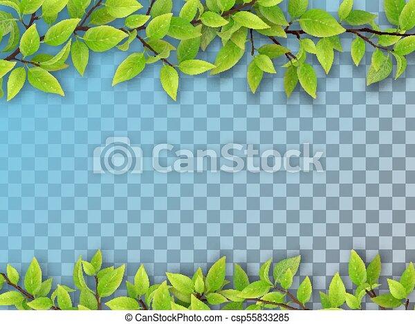 Un conjunto de ramas de árbol con hojas verdes - csp55833285