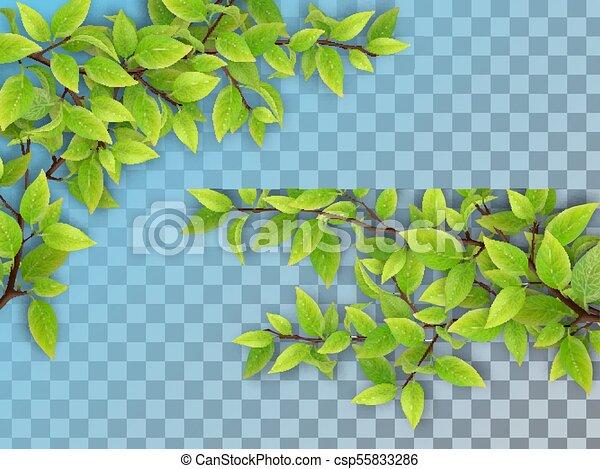 Un conjunto de ramas de árbol con hojas verdes - csp55833286