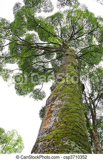 Un árbol tropical con musgo en su baúl - csp3710352