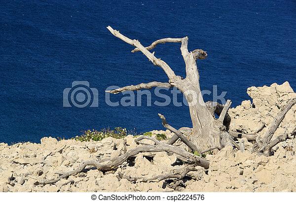 árbol, muerto, 05 - csp2224576
