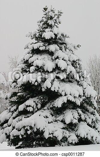 Árbol de Navidad - csp0011287