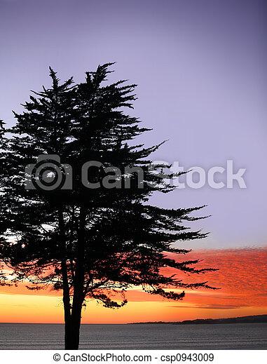 árbol, ocaso - csp0943009