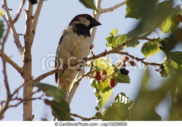 Pájaro en un árbol. - csp10239959