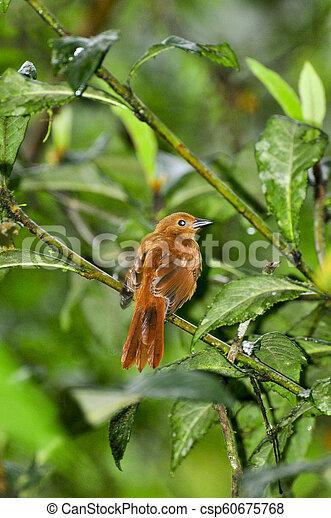 Un pájaro en un árbol - csp60675768