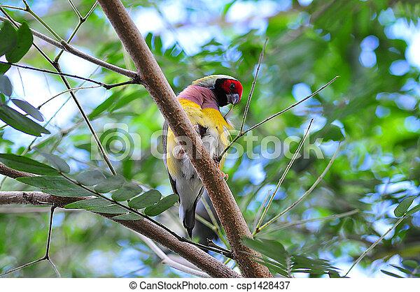 Pájaro en un árbol - csp1428437