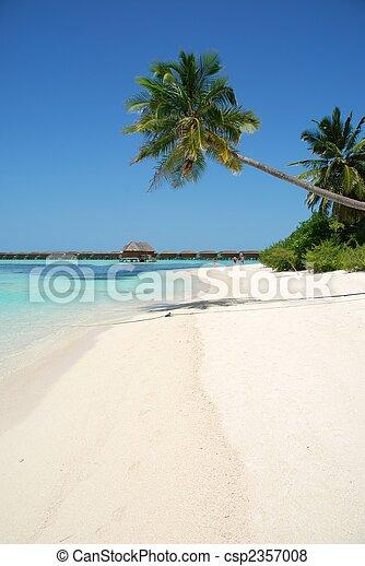 El paraíso de la playa con palmera colgando - csp2357008