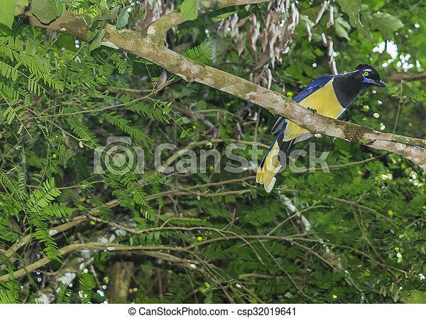 Un pájaro en un árbol en el parque Iguazu - csp32019641