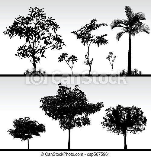La silueta del árbol - csp5675961