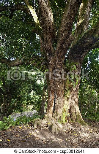 Árbol del bosque tropical, Maui, Hawaii - csp53812641