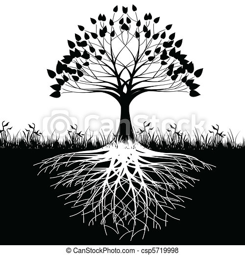 Raíces de árbol silueta - csp5719998