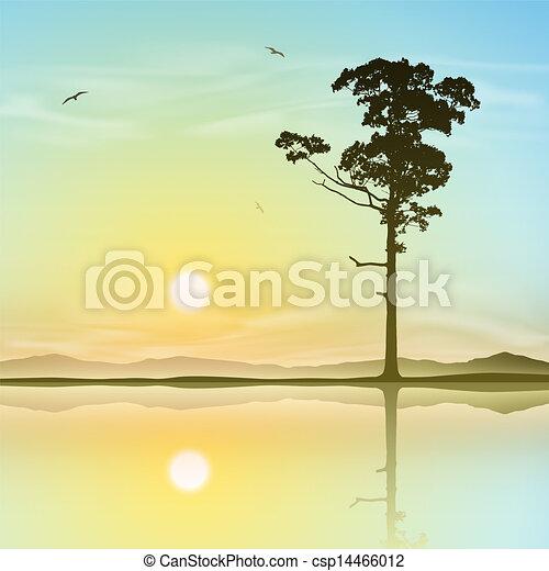 Árbol solitario - csp14466012