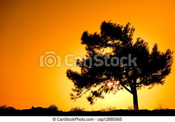 Silueta de un solo árbol al amanecer - csp12880565