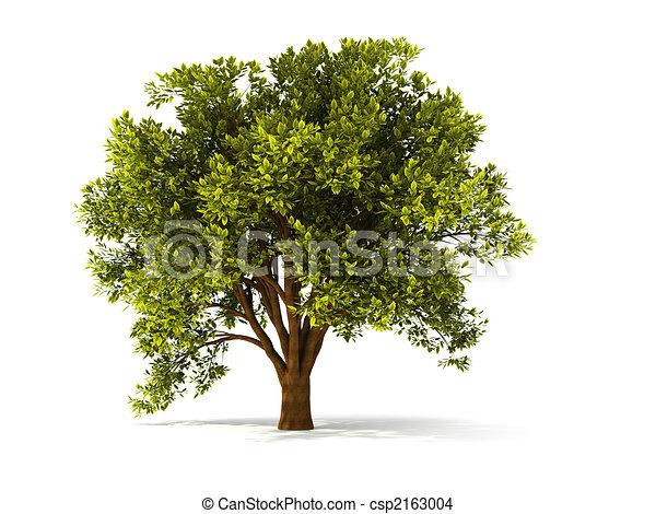 árbol, summerl, 3d - csp2163004