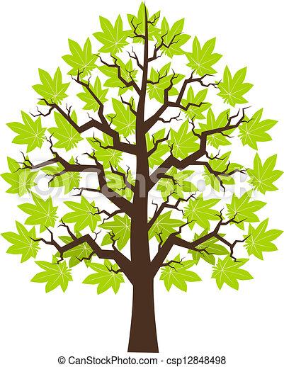 Maple de árbol con hojas verdes - csp12848498