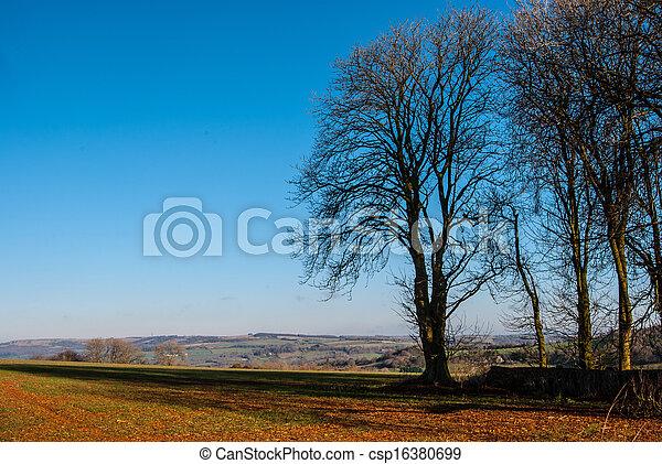 Árboles de otoño - csp16380699