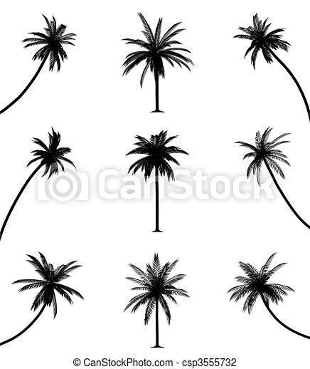 árboles de palma - csp3555732