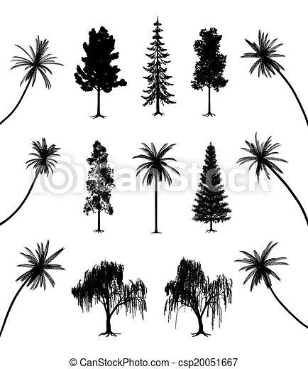 árboles, raíces, palmas - csp20051667