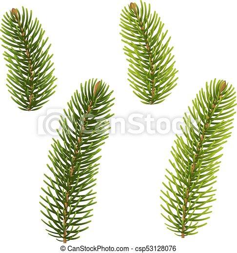 árvore abeto, isolado - csp53128076