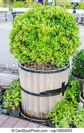 árvore - csp15604553