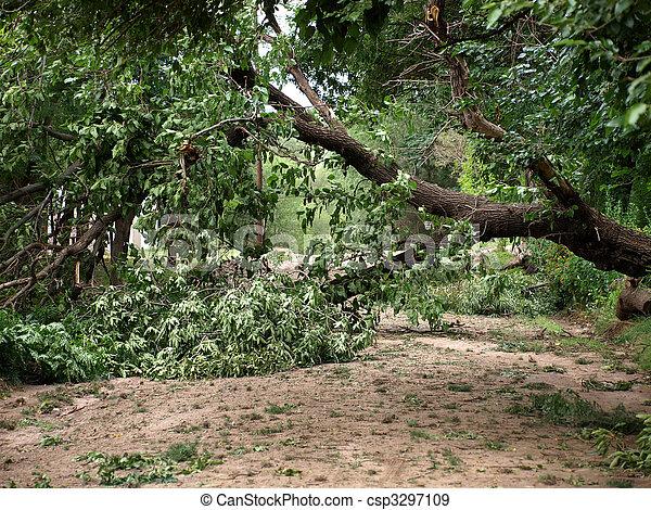 árvore caída - csp3297109