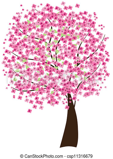 árvore cereja - csp11316679